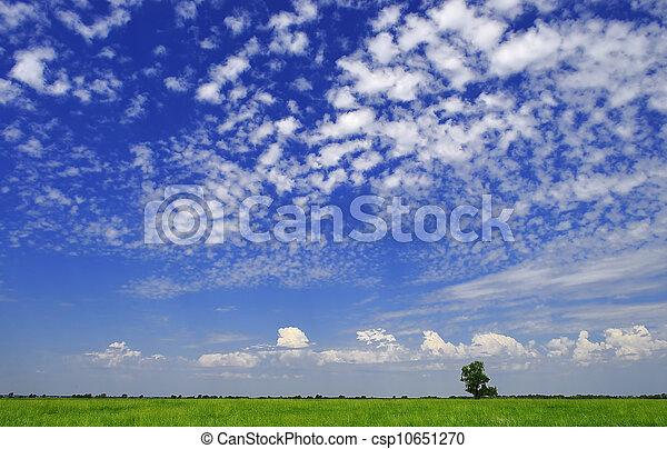 rural landscape - csp10651270