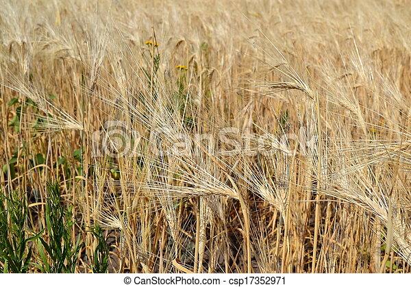 rural landscape - csp17352971
