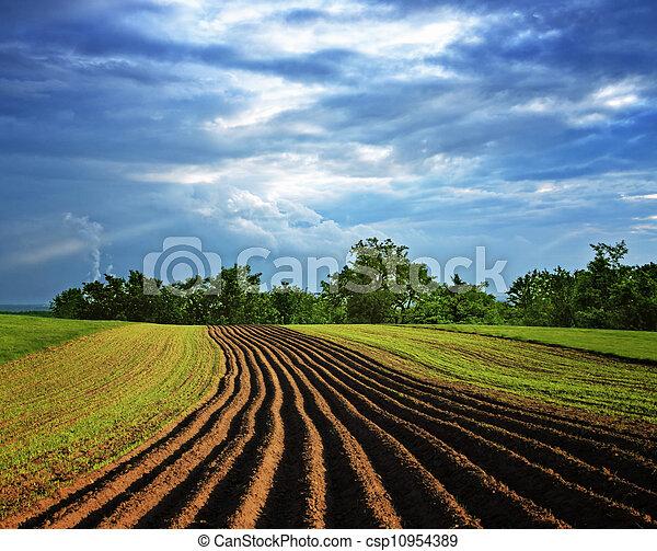 Rural landscape - csp10954389