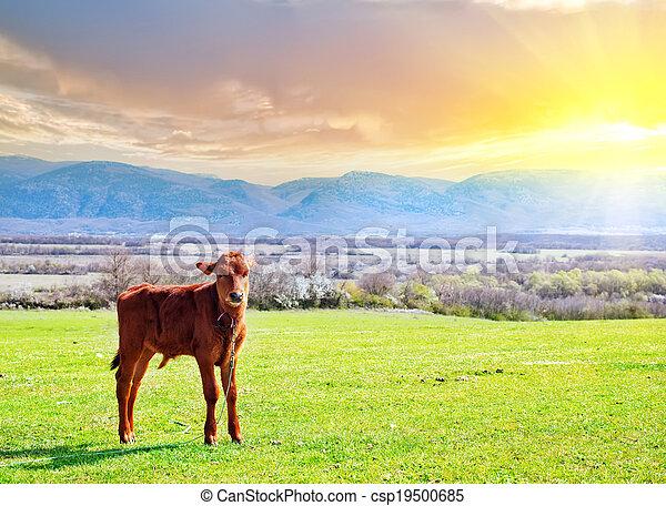 rural landscape - csp19500685