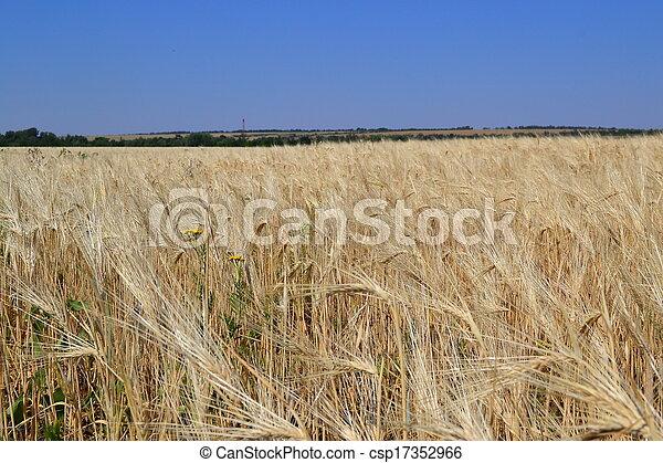 rural landscape - csp17352966