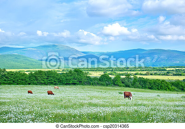 rural landscape - csp20314365