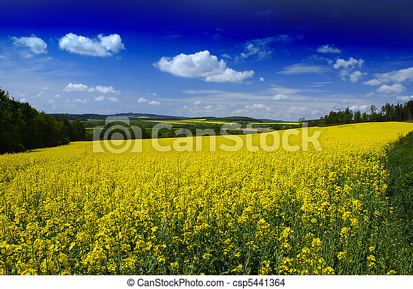 Rural landscape  - csp5441364
