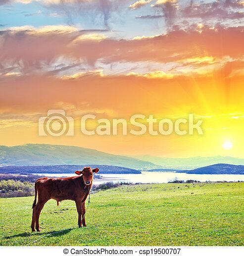 rural landscape - csp19500707