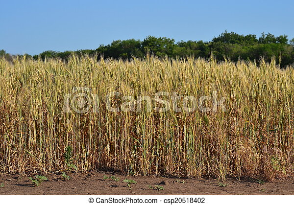Rural landscape - csp20518402