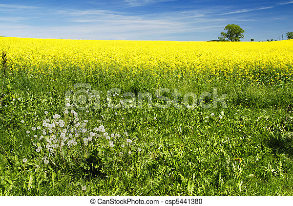 Rural landscape  - csp5441380