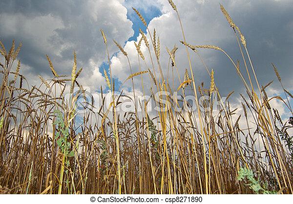 Rural landscape - csp8271890