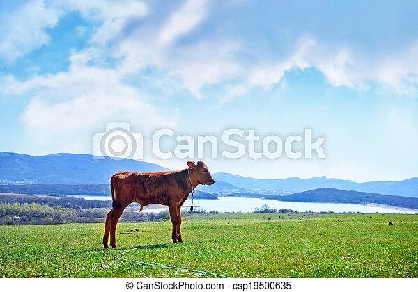 rural landscape - csp19500635
