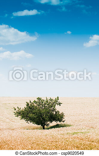 Rural landscape with tree - csp9020549