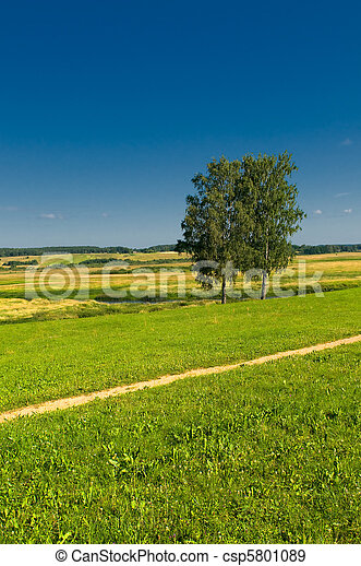 rural landscape with two trees - csp5801089