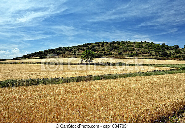 Rural landscape with wheat  fields and mountains. Sunset. Spain. - csp10347031