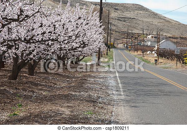 rural road in spring - csp1809211