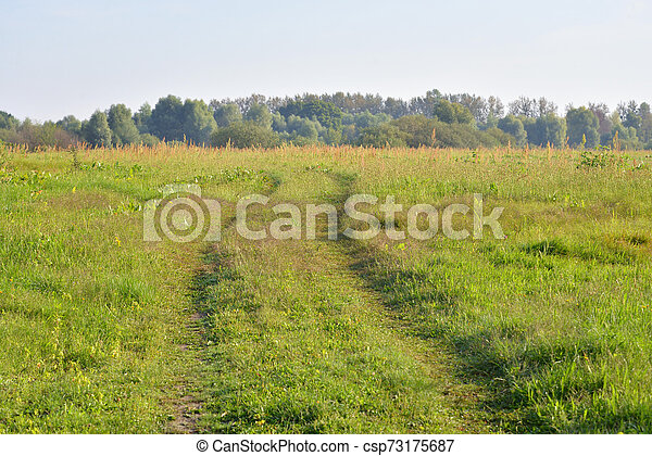 Rural road in the field. - csp73175687