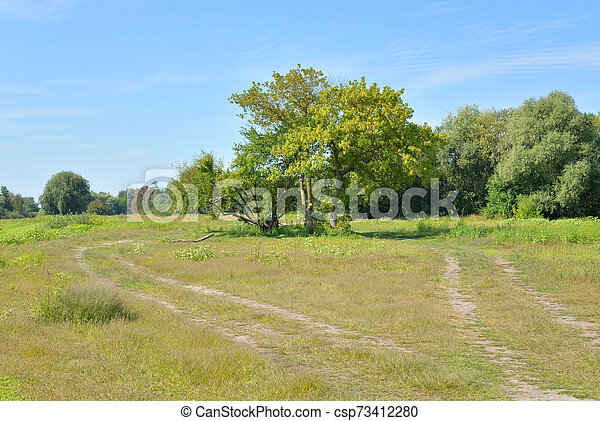 Rural road in the field. - csp73412280