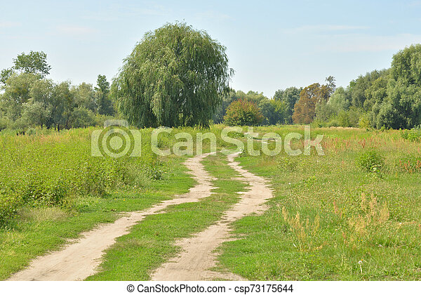 Rural road in the field. - csp73175644