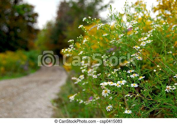 Rural road - csp0415083