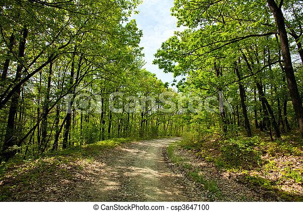 Rural road through trees - csp3647100