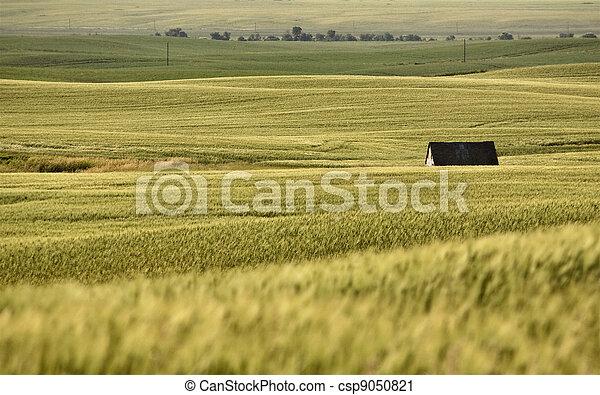 Rural Saskatchewan - csp9050821