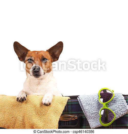 Jack Russel terrier viajando - csp46140386