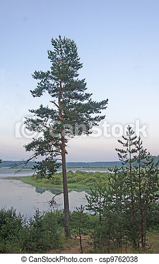 Russian forest - csp9762038