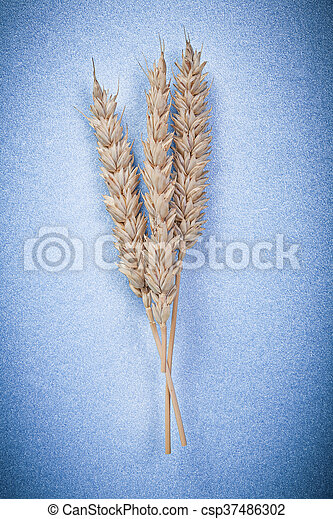 Rye ears on blue background close up view - csp37486302