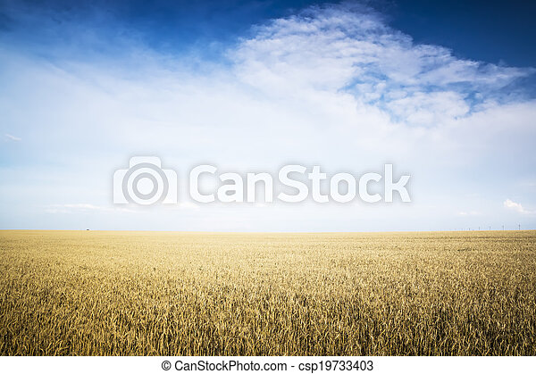 Rye field on a Sunny day. - csp19733403