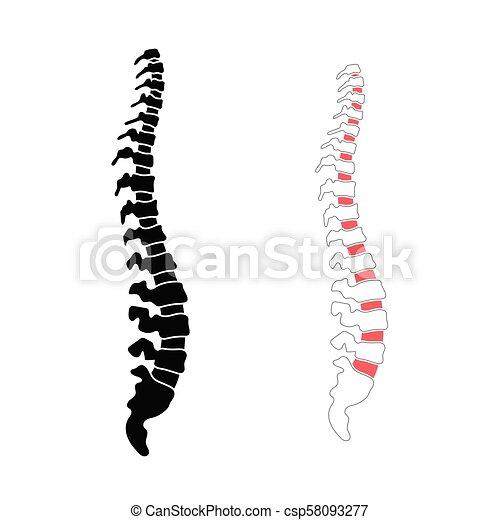 rygg, vektor, mänsklig, illustration - csp58093277