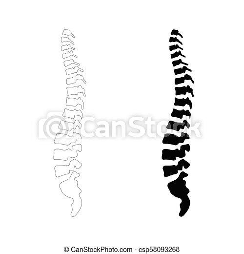 rygg, vektor, mänsklig, illustration - csp58093268