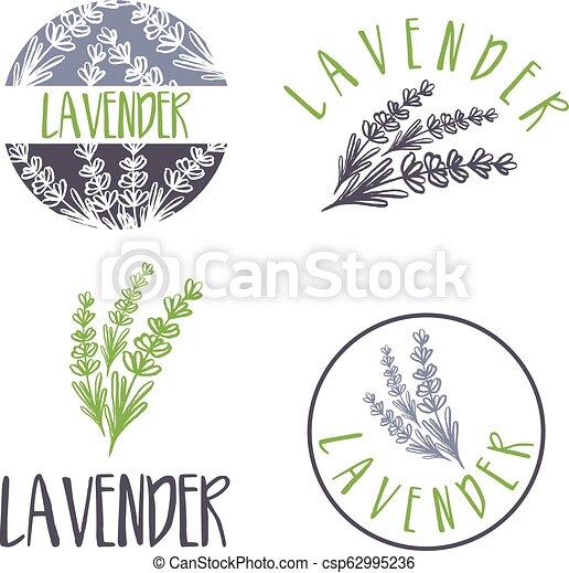 sätta, lavender., abstrakt, illustration, vektor, design, mall, logo, ikon - csp62995236