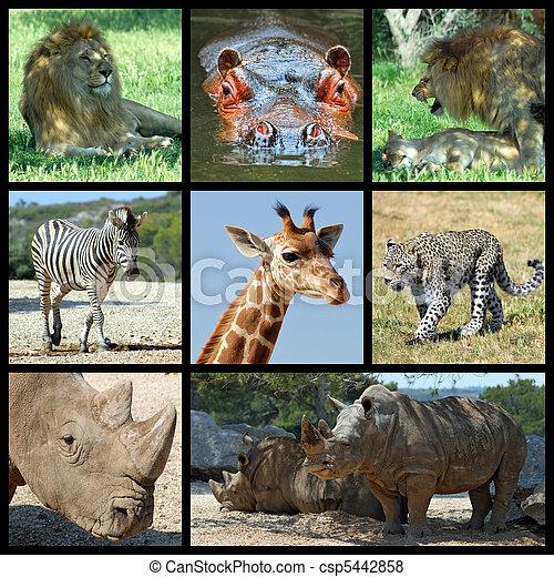 säugetiere, afrikas, mosaik - csp5442858