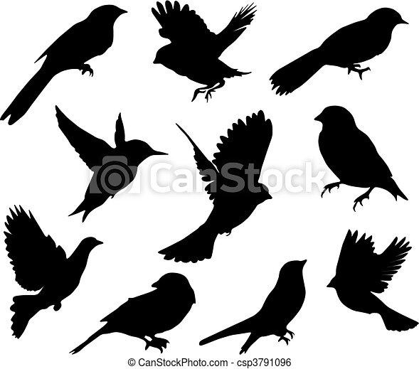 sæt, birds., vektor - csp3791096