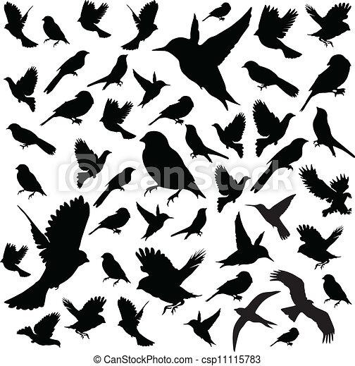 sæt, birds., vektor - csp11115783