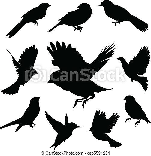 sæt, birds., vektor - csp5531254