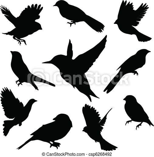 sæt, birds., vektor - csp6268492