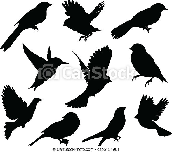 sæt, birds., vektor - csp5151901