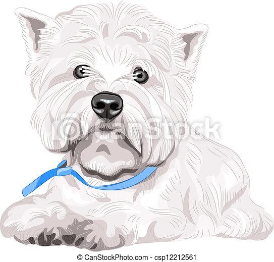séance, ouest, race, chien, vecteur, sérieux, blanc, région montagneuse, terrier - csp12212561
