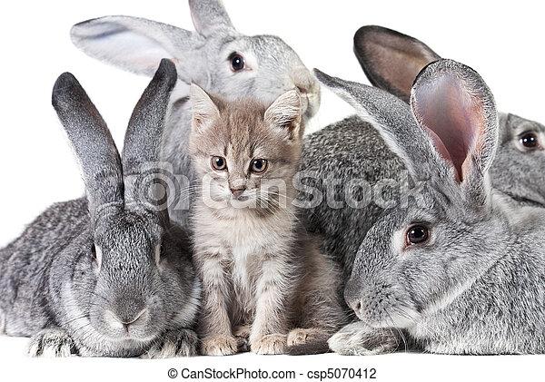 söt, djuren - csp5070412