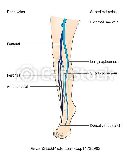 słojowanie, noga - csp14738902
