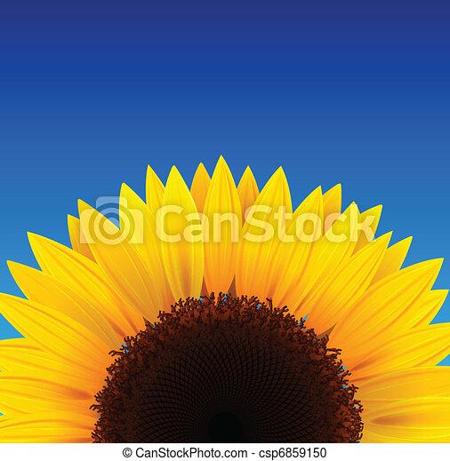 słonecznik, tło - csp6859150
