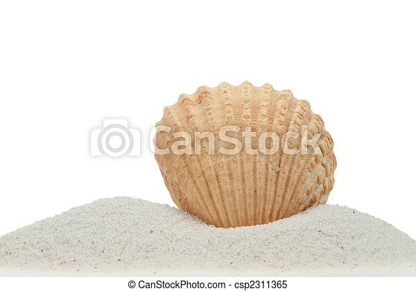 sabbia, conchiglia, isolato, mare, bianco - csp2311365