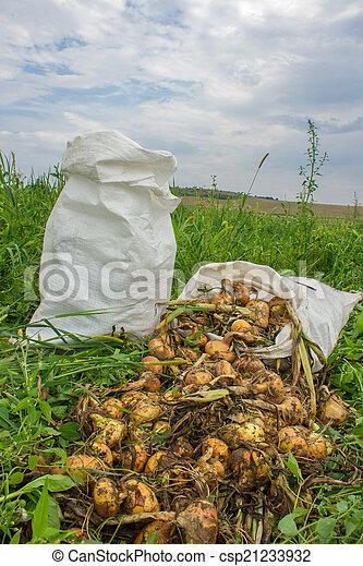 sacks of onions - csp21233932