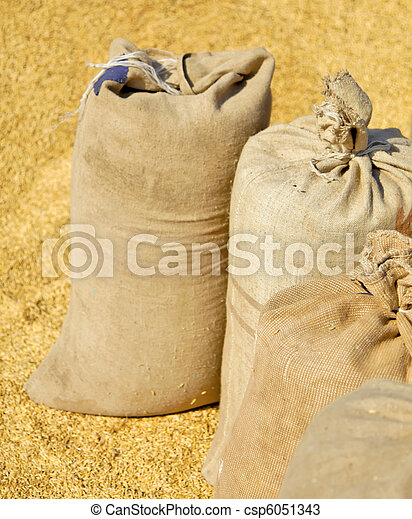 Sacks with wheat harvest and yellow hweat at background. - csp6051343