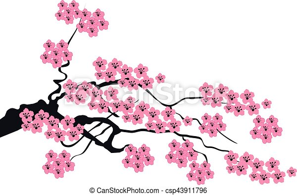 sacura blossom vector cherry blossom branch eps vectors search rh canstockphoto ca cherry blossom vector outline cherry blossom vector black and white