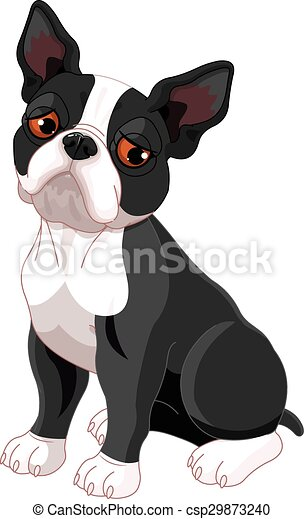 Sad Boston Terrier - csp29873240