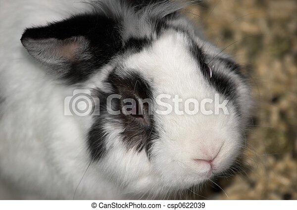Sad bunny - csp0622039