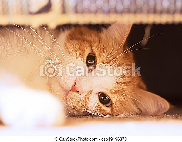 Sad cat - csp19196373