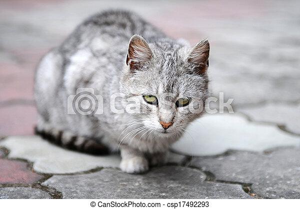 Sad cat - csp17492293