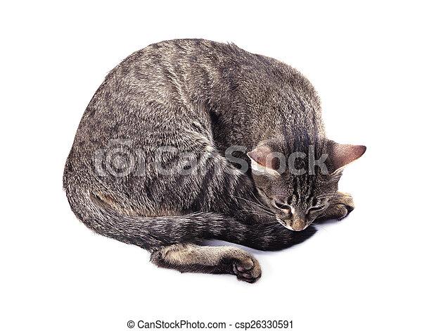 Sad cat - csp26330591