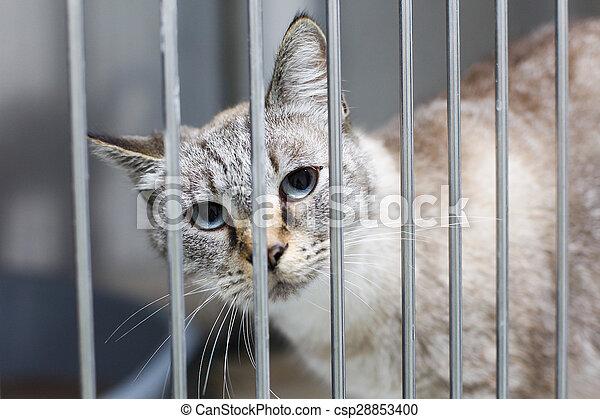 Sad cat - csp28853400