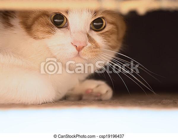 Sad cat - csp19196437